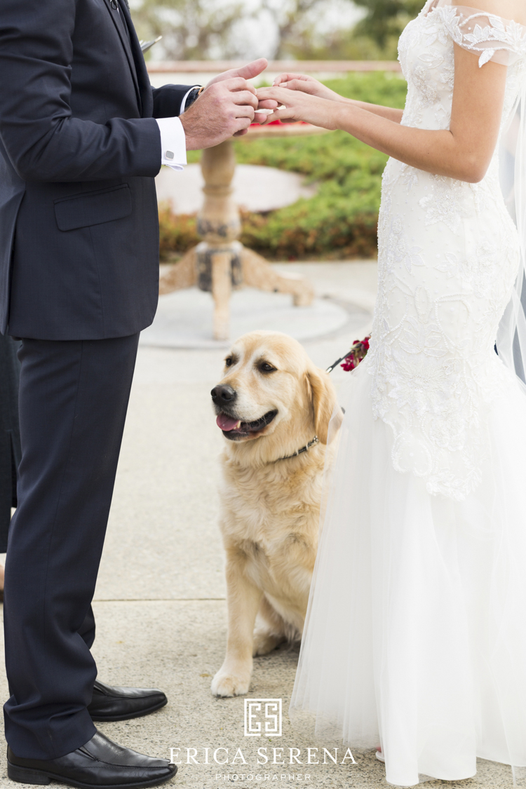 bluewater grill wedding, mardie & co, matthew landers, loui col designs, wedding dog